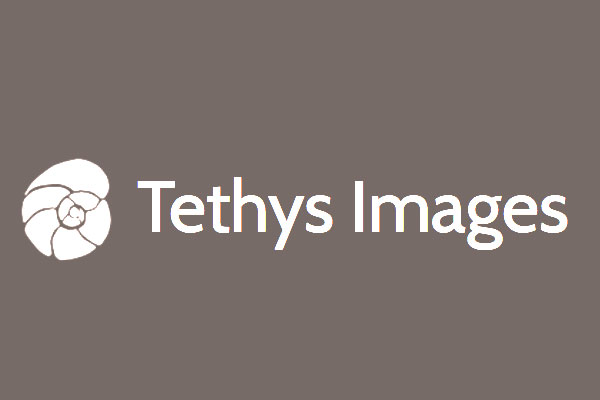 Tethys Images
